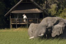 Elephants at Khwai River Lodge