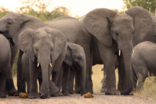 Elephants spotted on a game drive safari in the Kruger National Park