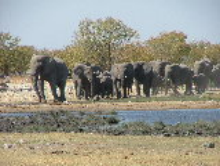 Etosha Elephants at a water hole