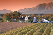 Wine Estate in Paarl